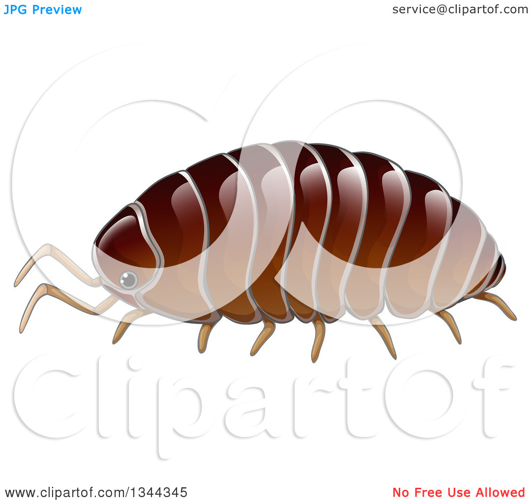 Clipart of a Brown Woodlouse.