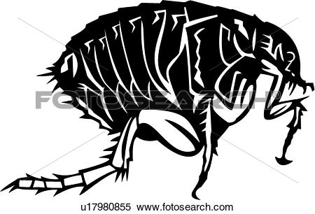 Clipart of , bugs, flea, insect, u17980855.