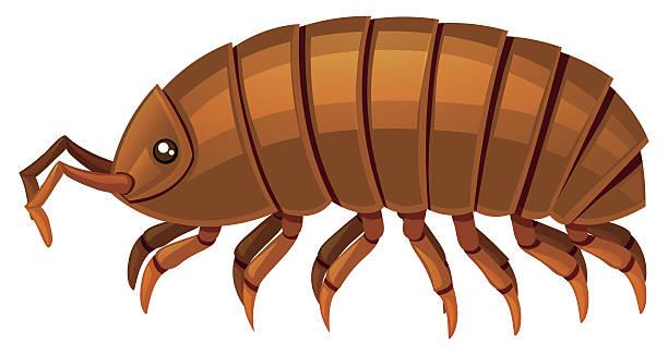Trilobites Clip Art Clip Art, Vector Images & Illustrations.