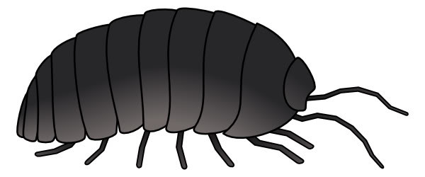 70 Bugs Clipart.