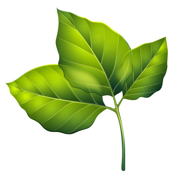 Three Green Leaves PNG Clipart Image.