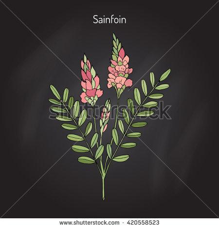 Sainfoin Foto, immagini royalty.