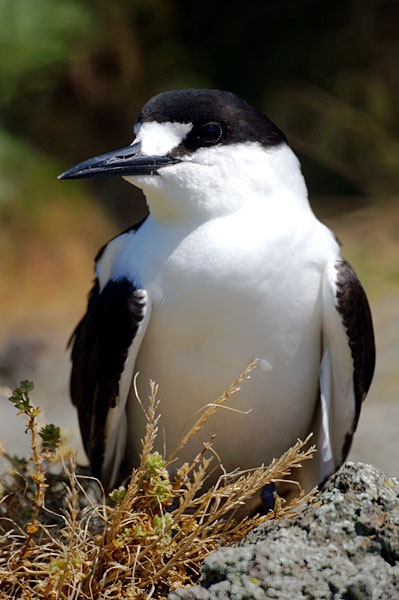 1000+ images about Beautiful Birds! on Pinterest.