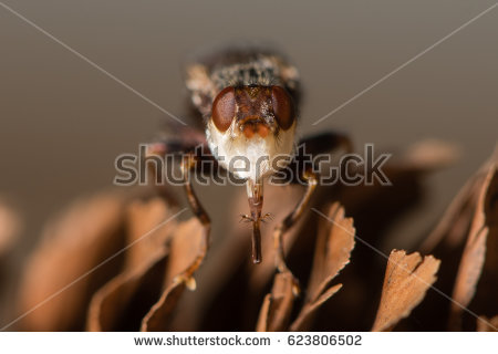 Parasitoid Stock Images, Royalty.