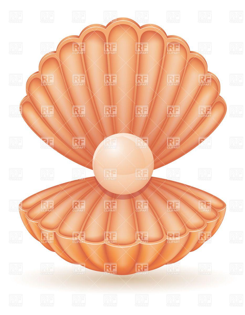 Open Scallop Shell Clipart.