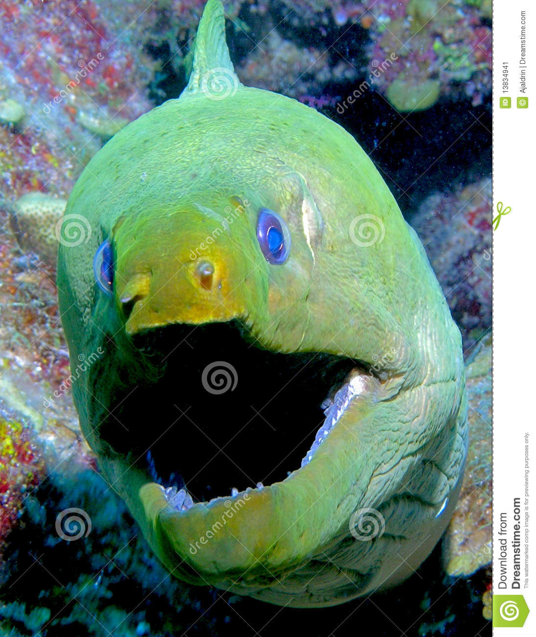 Big Mouth Eel Stock Image.