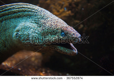 Snake Mouth Open Stock Images, Royalty.