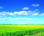 Stock Photo of cottage, Cheju Island, Cheju, plain, open field.