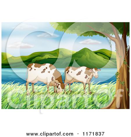 Cartoon of Open Range Cattle Grazing on a Lake.