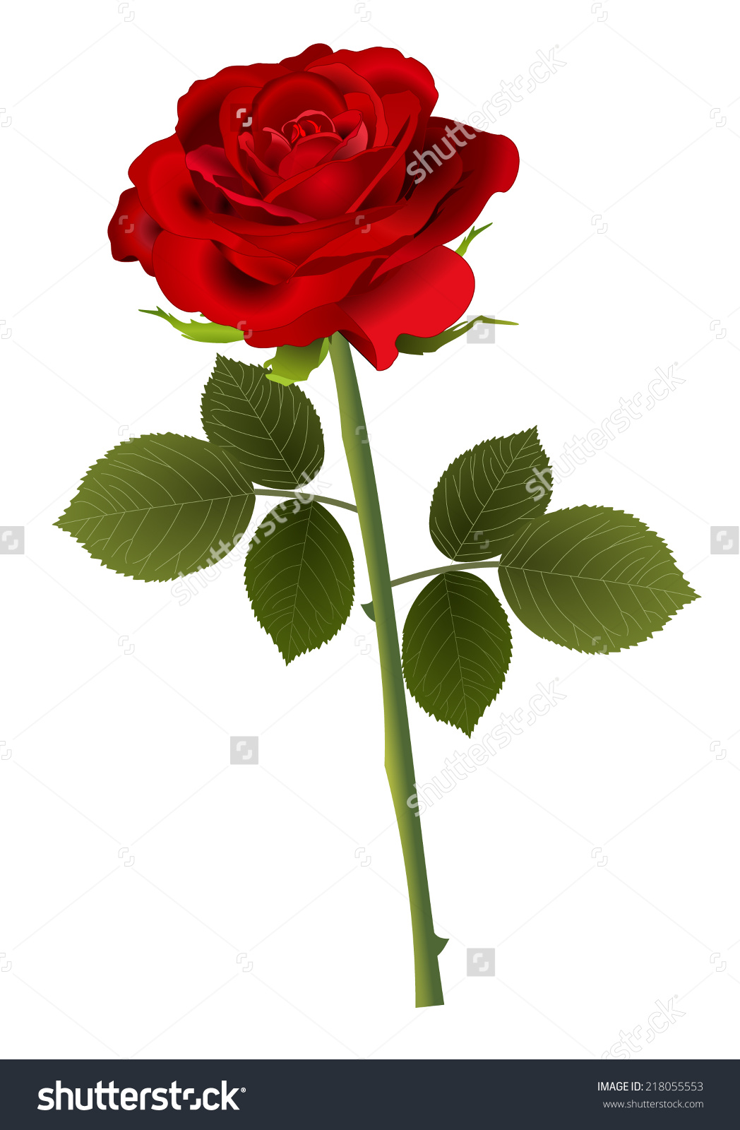 Single Beautiful Red Open Rose Leaves Stock Vector 218055553.