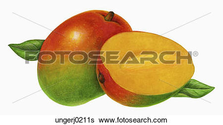Stock Illustration of One and Half Mangoes ungerj0211s.