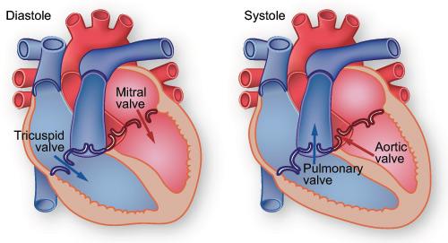 Heart Valve Repair or Replacement.