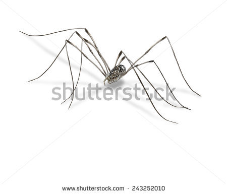"daddy Longlegs"" Stock Photos, Royalty."