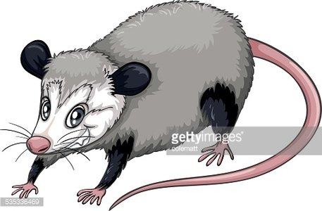 Opossum Clipart Image.
