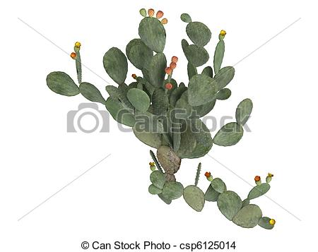 Opuntia Stock Illustration Images. 69 Opuntia illustrations.