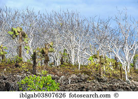 Robusta Stock Photo Images. 3,848 robusta royalty free images and.
