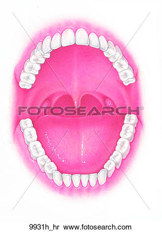 Stock Illustration of Oral Cavity with Teeth Unlabeled 9931h_hr.