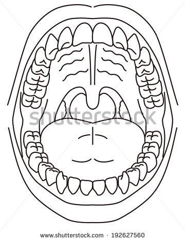 Schematic Diagram Oral Cavity Stock Vector 192627560.