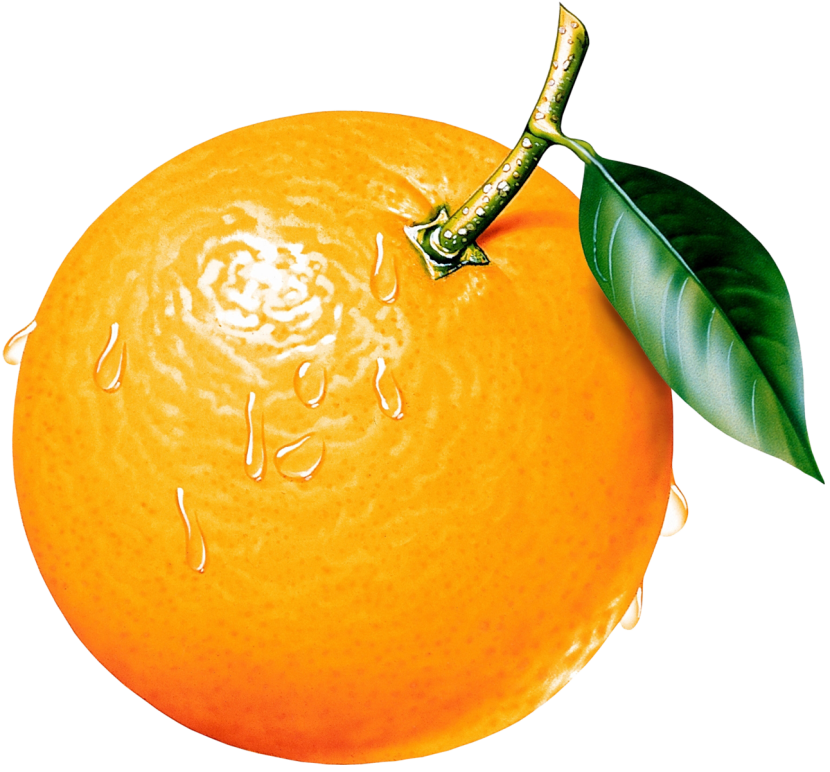 Clipart of orange.