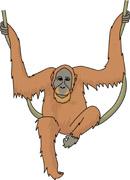 Clip Art Orangutan Cartoon Clipart.