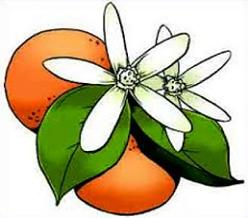 Free Orange Blossom Clipart.