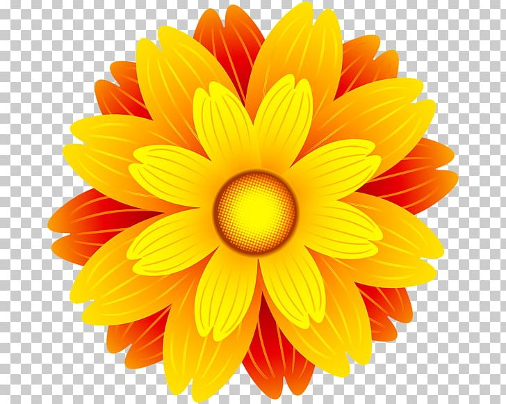 Flower Orange Blossom PNG, Clipart, Chrysanths, Clip Art.