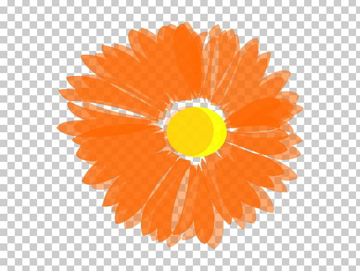 Flower Orange Blossom PNG, Clipart, Blossom, Blue, Circle.