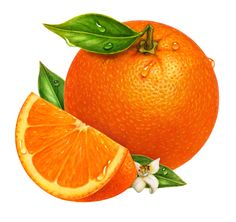 An orange branch illustration of six oranges with orange blossoms.