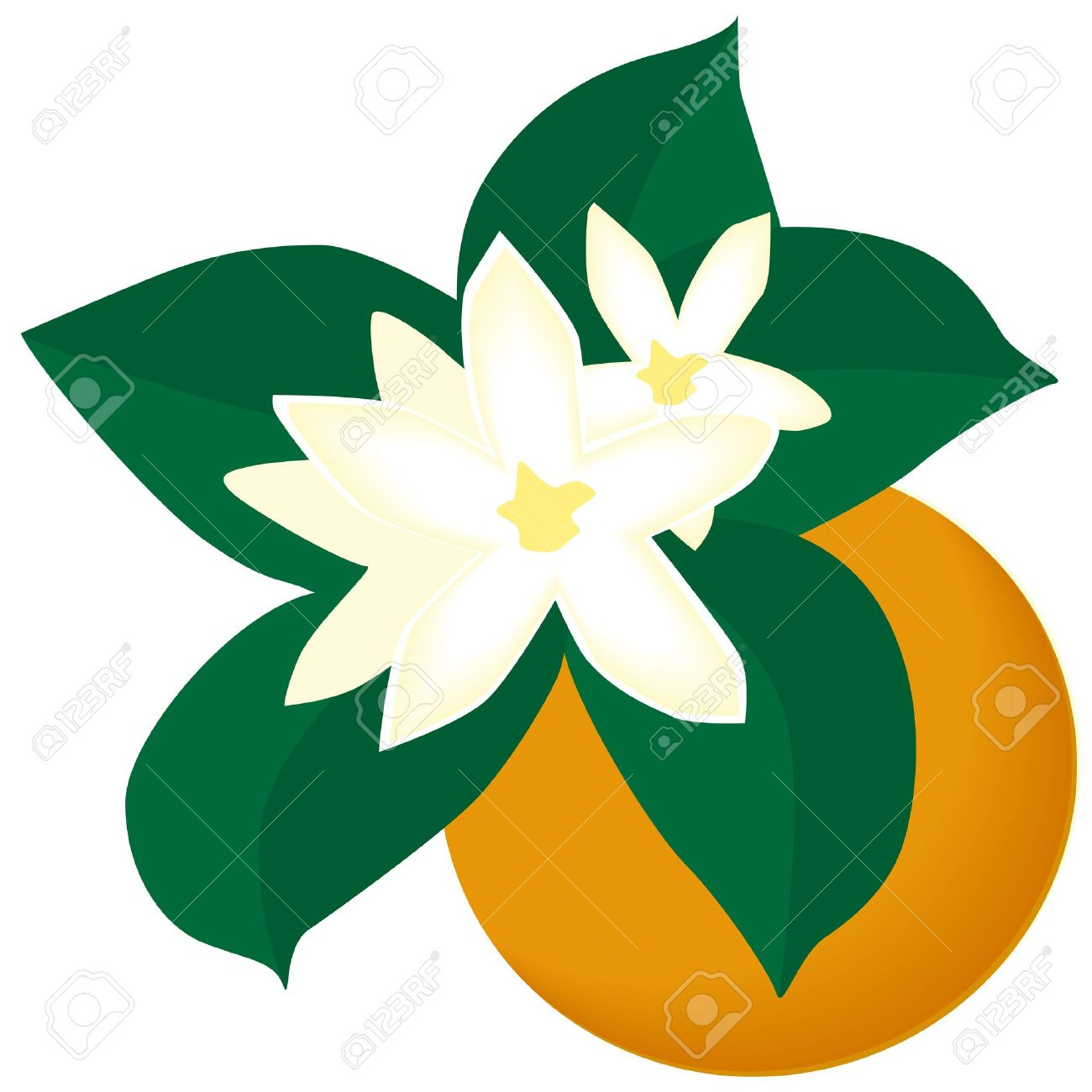 Orange blossom clip art free.