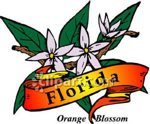 Florida Orange Blossom Clipart.