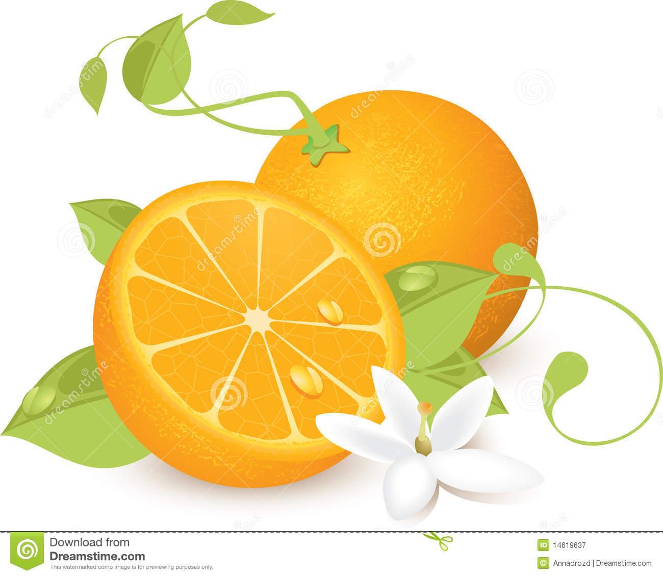 Orange Blossom Clipart.