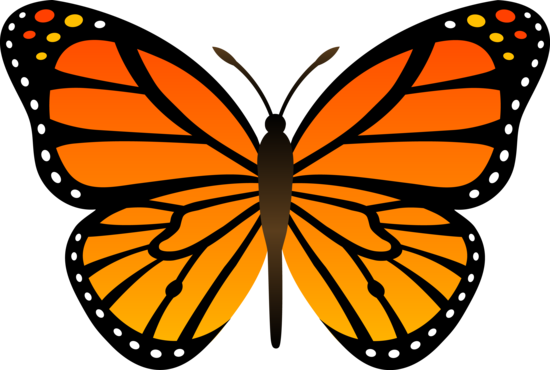Orange butterfly clipart #12
