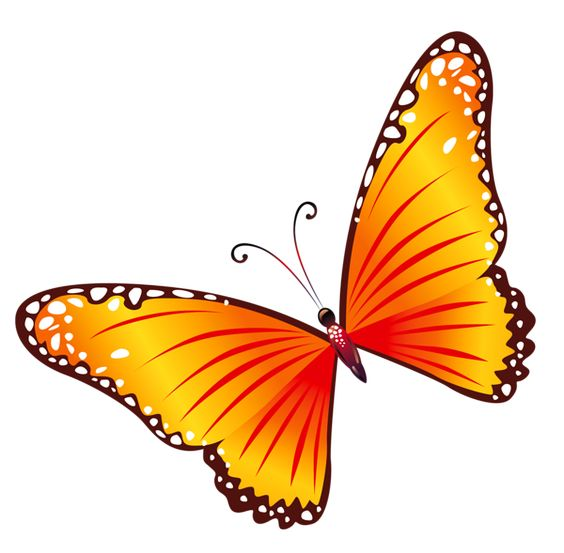 Orange butterfly clipart #15