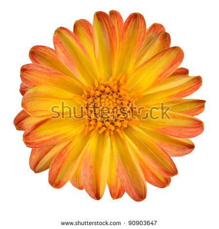 Purple Flower With Yellow Center Stock Images, Royalty.