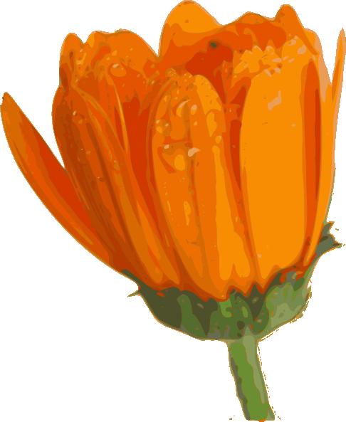 Blurred Orange Daisy Clip Art at Clker.com.