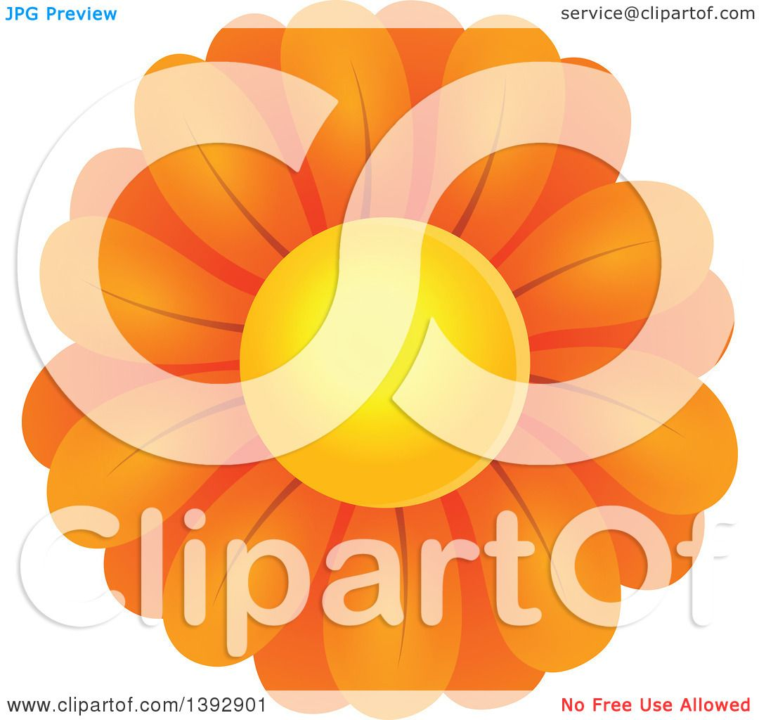 Clipart of an Orange Daisy Flower.