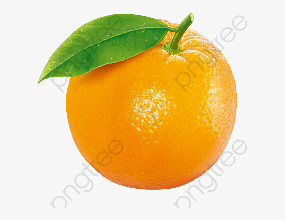 Orange Png Clipart.