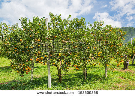 Orange Farmer Stock Images, Royalty.