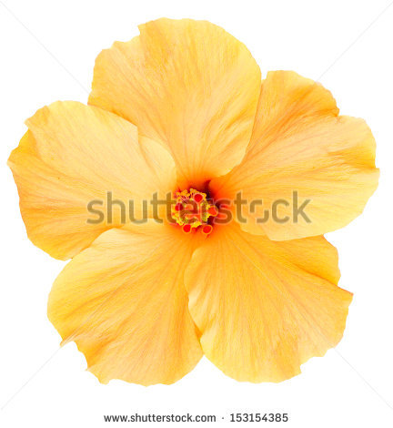 Hawaiian Flowers Stock Images, Royalty.