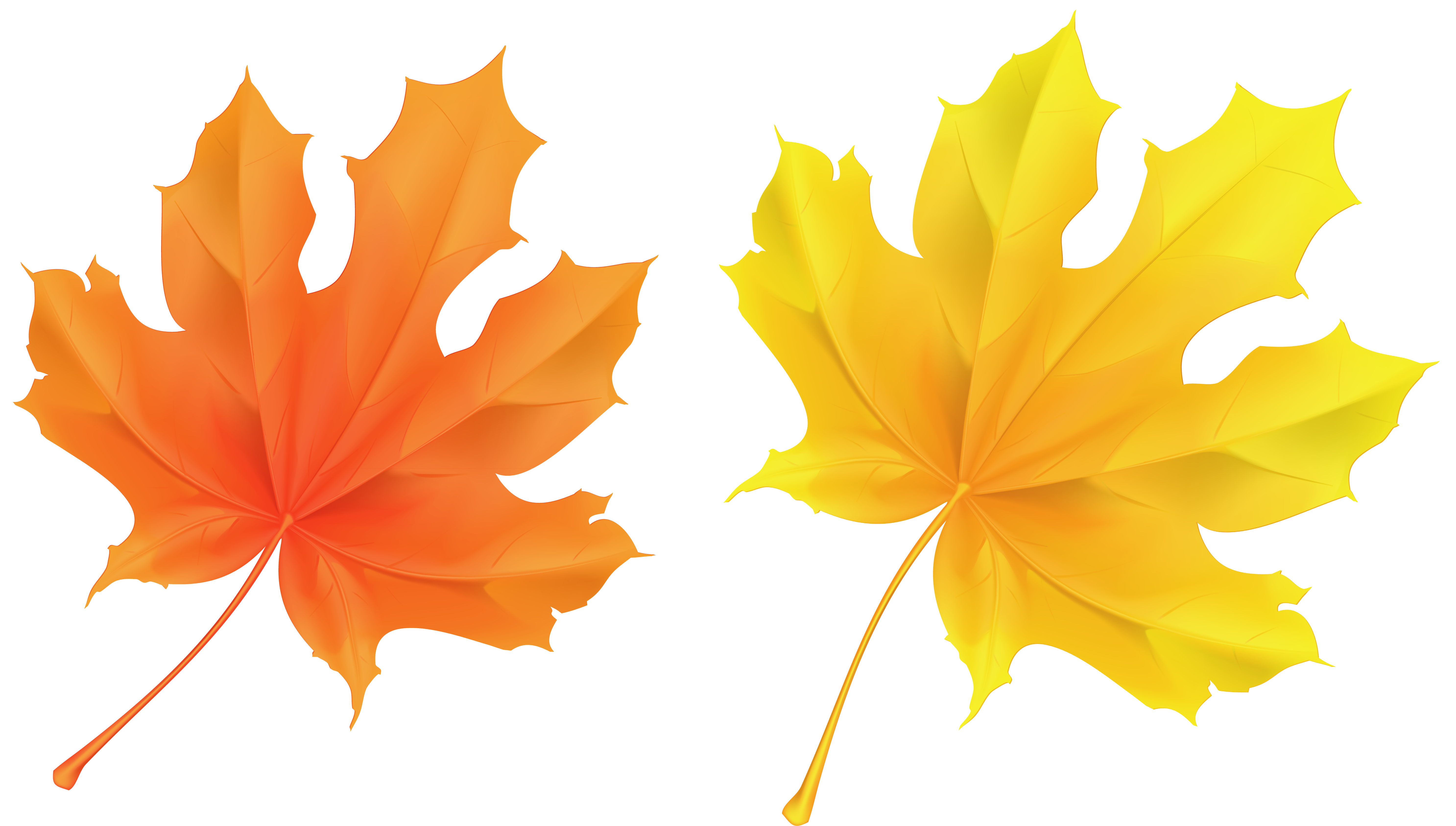 Transparent Yellow and Orange Leaves Picture.