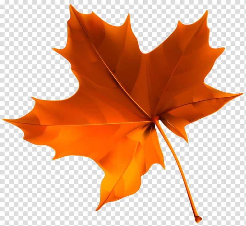 Autumn leaf color , Autumn Red Leaf , orange maple leaf.