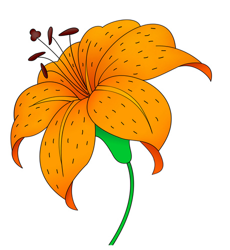 Tiger Lily Clipart.
