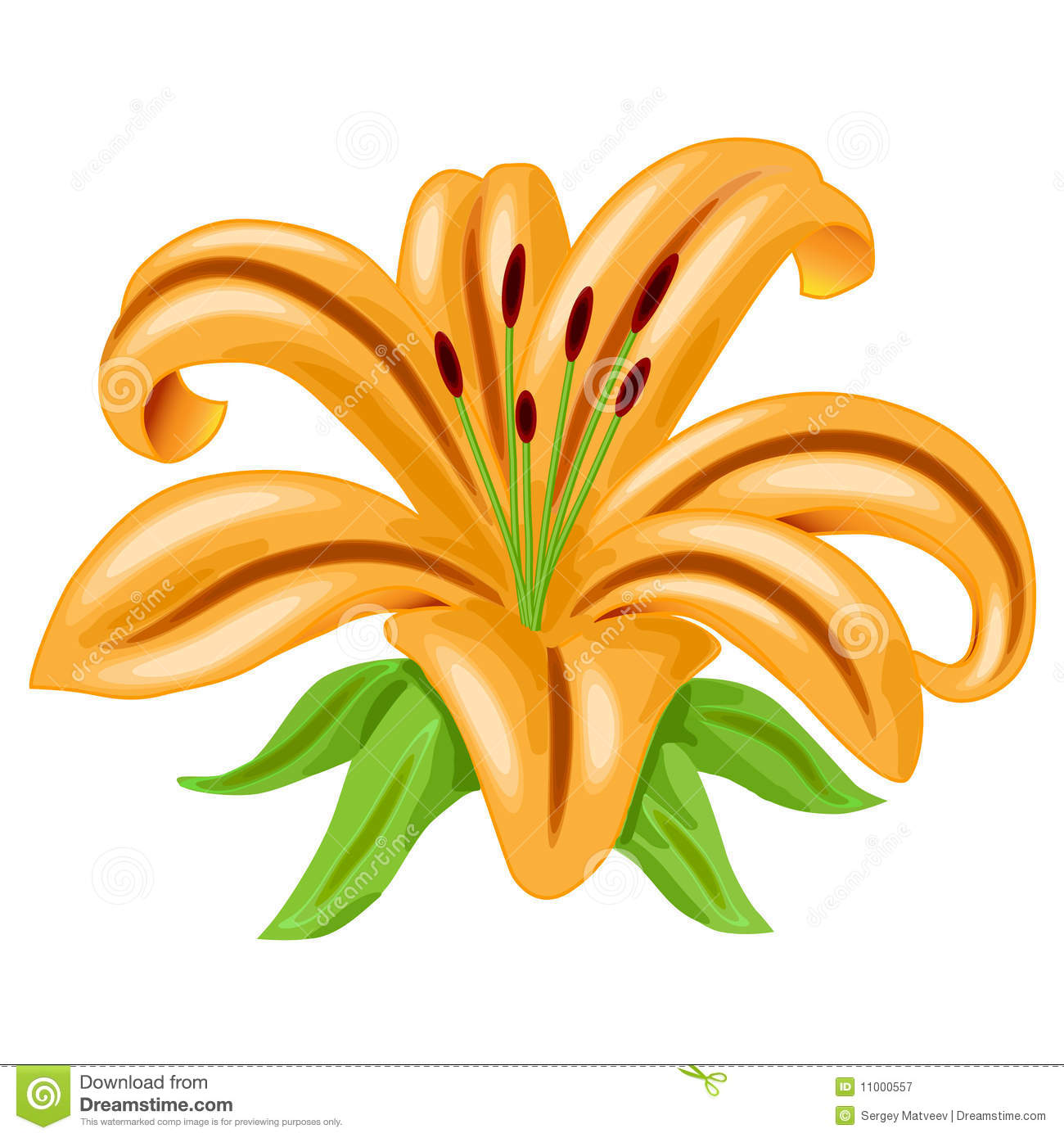 Orange Lily. Vector Royalty Free Stock Image.
