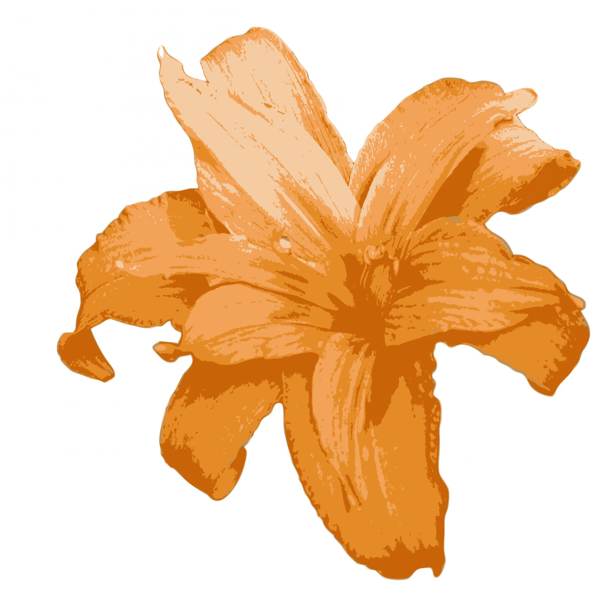 Orange Lily Flower Clipart Free Stock Photo.