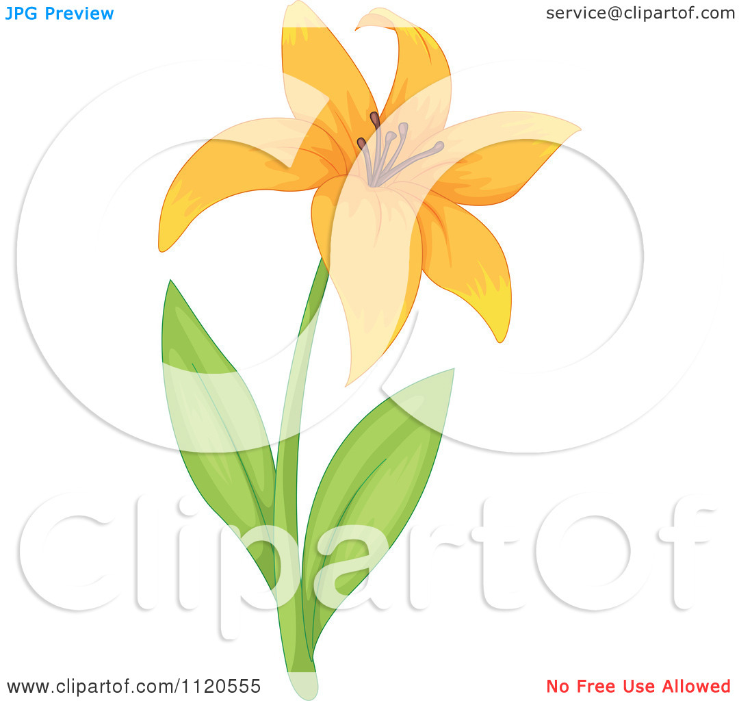Clipart Of An Orange Lily Flower And Stem.