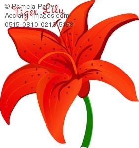 Clip Art Illustration of an Orange Tiger Lily.