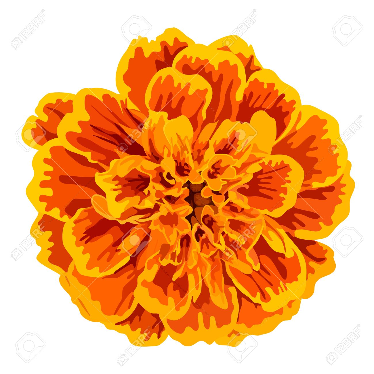 Orange Marigolds Clip Art.