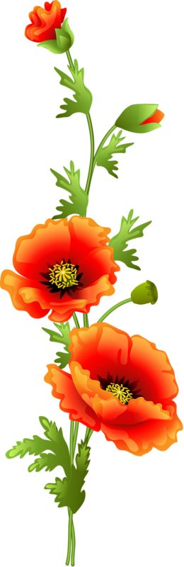 Poppies and Daisies Transparent PNG Clipart.
