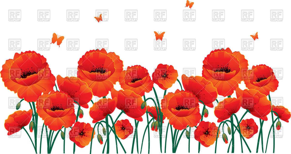 Beautiful red poppy flowers Vector Image #58583.