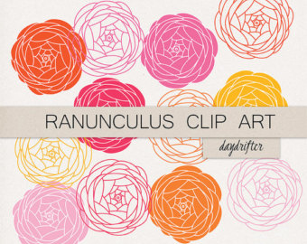 Ranunculus clip art.